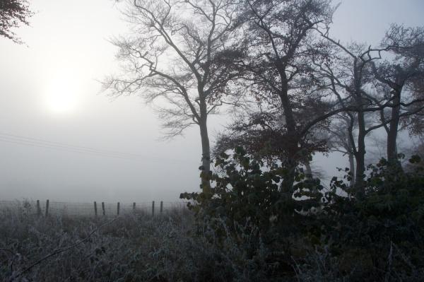 november-trees-mist-13
