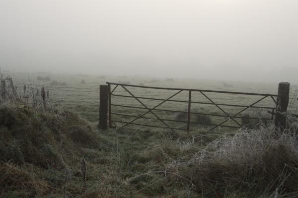 november-trees-mist-21