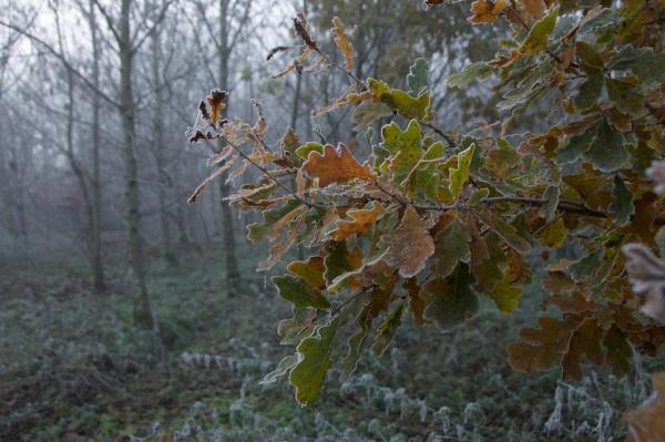 november-trees-mist-229