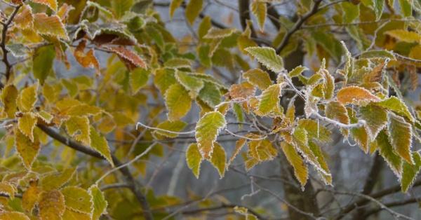 november-trees-mist-50