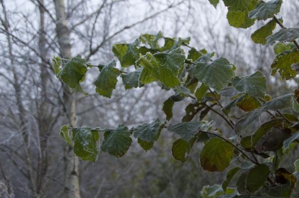 november-trees-mist-55