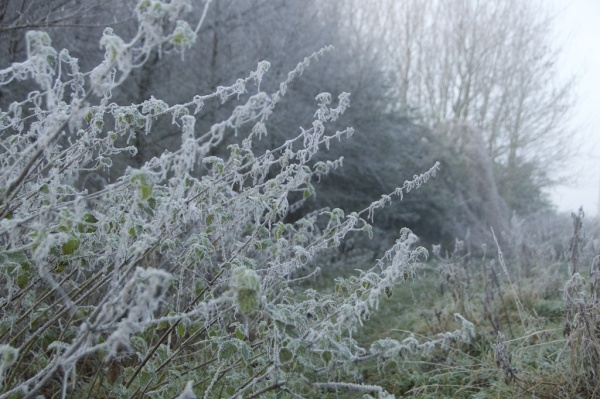 november-trees-mist-8